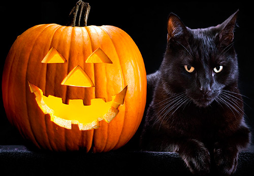 13 черных котов на Хэллоуин
