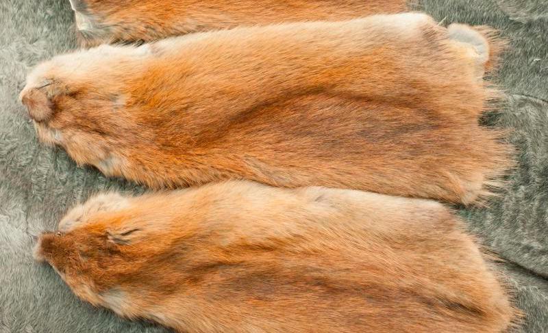 Мех ондатры