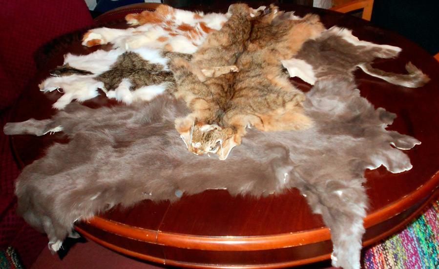 Меховые изделия из кошек в Китае
