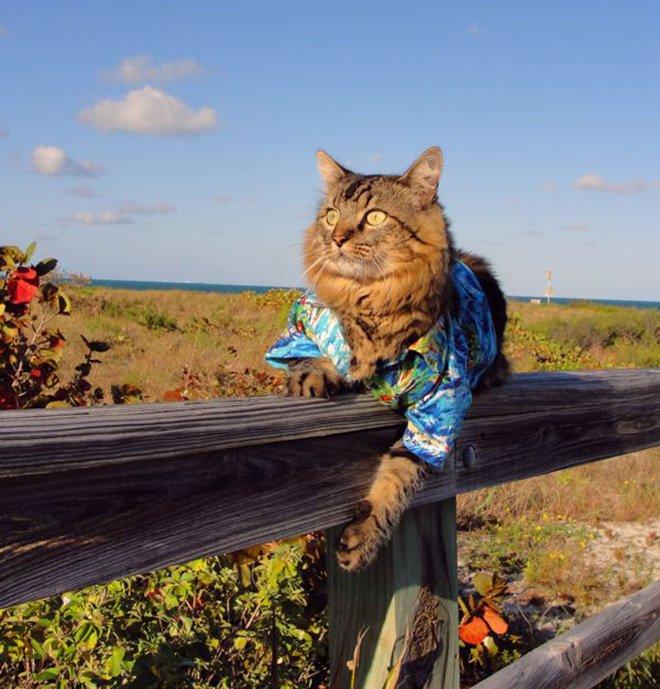 Гламурный кот в одежде, фото с котом