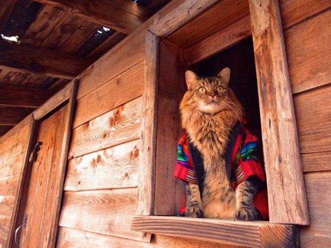 Гламурный кот любитель фотографироваться