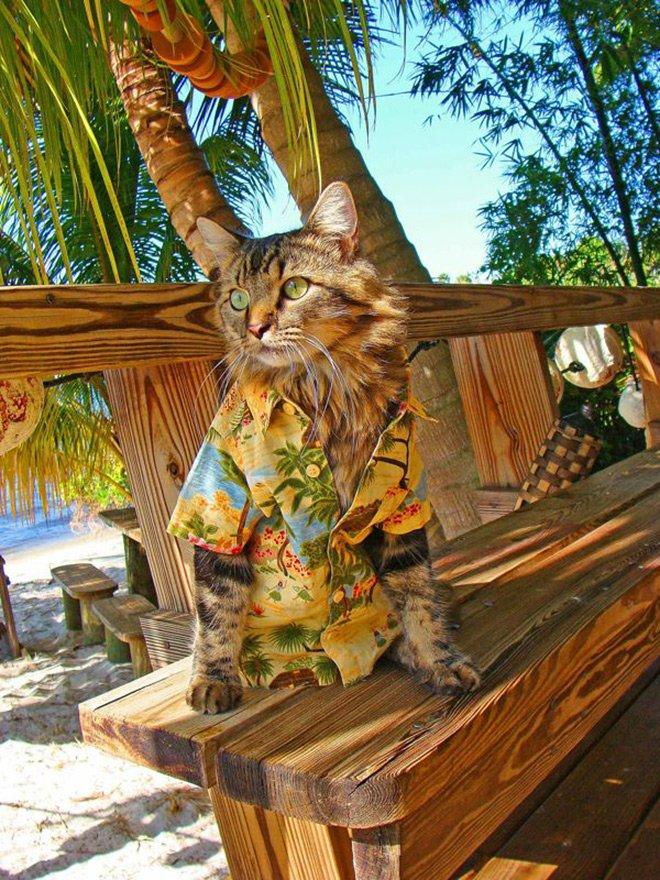 Гламурный кот - любитель фотографироваться