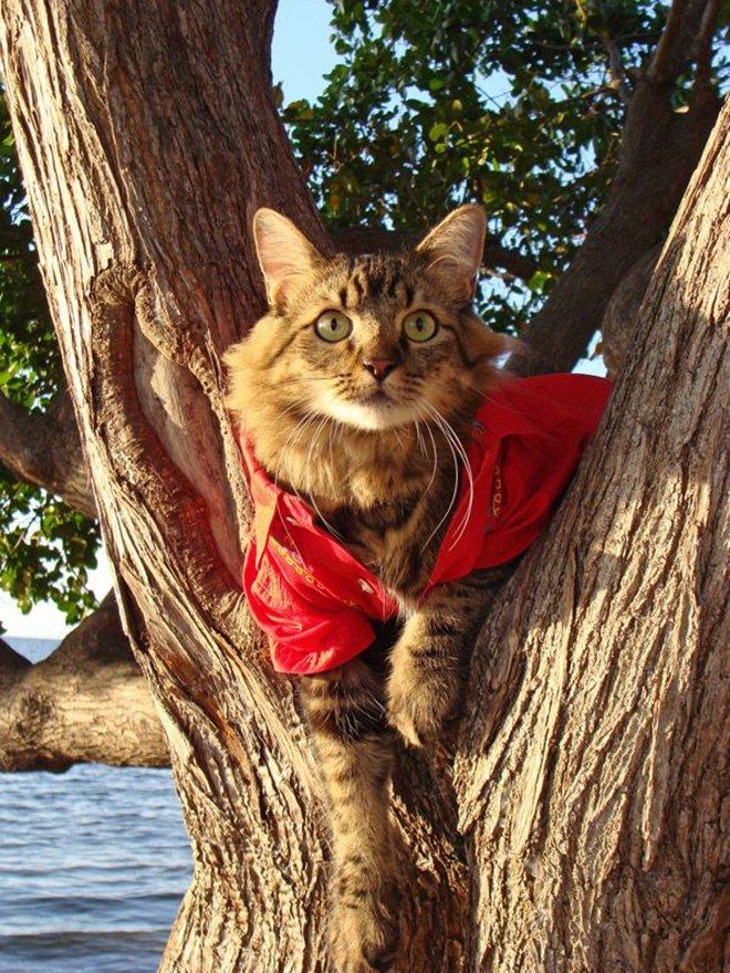 кот в одежде фото