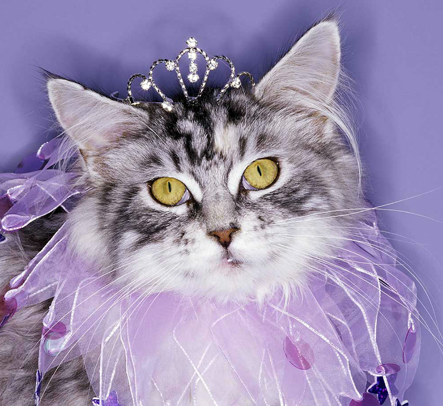 Теплые одежды для кошек