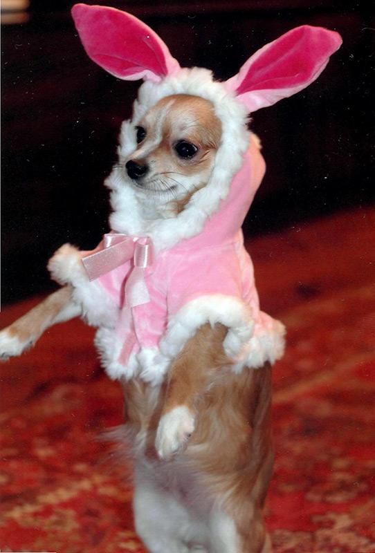 Новогодние наряды для собак и кошек